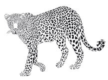 Leopart black on white Royalty Free Stock Photo