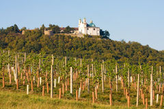 Leopoldsberg gesehen vom Weinyard, Wien lizenzfreies stockbild
