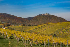 Leopoldsberg and Vineyards in Vienna during the Autumn Royalty Free Stock Photos