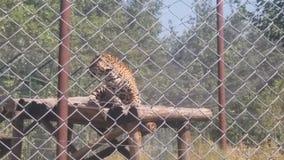 Lepard skopje park Macedonië Royalty-vrije Stock Fotografie