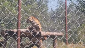 Lepard skopje parkerar macedonia Royaltyfri Fotografi