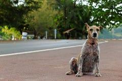 Leper dog stock photo