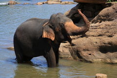 Еlephant in the river Royalty Free Stock Image