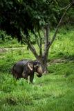Lephant si leva in piedi nel mezzo della foresta Immagini Stock Libere da Diritti