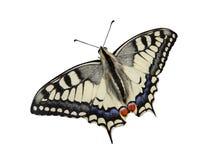 Lepidópteros de la mariposa Imagenes de archivo