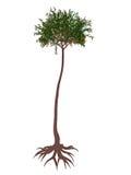 Lepidodendron aculeatum prehistoric tree - 3D render Stock Photos