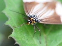 Lepidoptera closeup Stock Photos