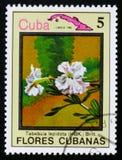 Lepidota Tabebuia, serie λουλούδια της Κούβας, circa 1983 Στοκ Φωτογραφία