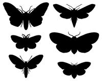 Lepidotteri Fotografie Stock