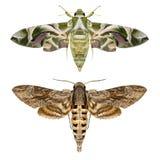 lepidotteri Fotografie Stock Libere da Diritti