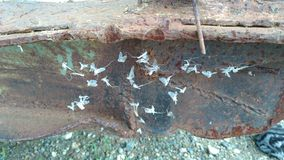 Lepidotteri bianchi in una ragnatela Immagini Stock Libere da Diritti