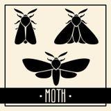 Lepidotteri neri isolati su fondo leggero Fotografia Stock Libera da Diritti