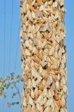 Lepidotteri zingareschi 12 Fotografie Stock