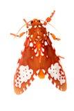Lepidottero Immagine Stock Libera da Diritti