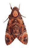 lepidottero Fotografia Stock Libera da Diritti