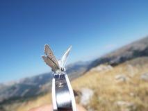 Lepidottero che riposa su Iphone Fotografia Stock