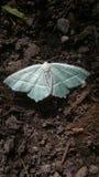 Lepidottero degli azzurri su terreno incolto Immagine Stock Libera da Diritti