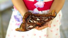 Lepidottero di atlante di riposo Fotografie Stock