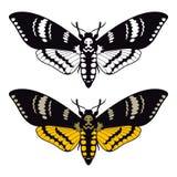 Lepidottero di falco della testa di morti Fotografie Stock