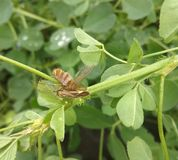 Lepidottero e vespa morta fotografia stock