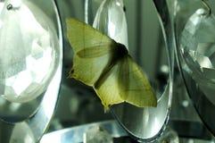 Lepidottero sul candeliere fotografie stock