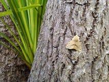 Lepidottero sulla palma Fotografia Stock Libera da Diritti