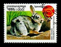Leporidae de la familia del conejo, año del serie del conejo, circa 1999 Fotografía de archivo libre de regalías