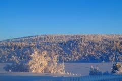 Leppäjärvi i vinter Royaltyfri Bild