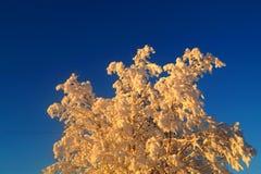 Leppäjärvi i vinter och björkträd Arkivbild