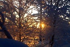 Leppäjärvi och solnedgång i vinter Arkivfoton