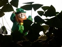 Leprechaun. A leprechaun spotted in a shamrock grove. Background is isolated so image can be superimposed over any desired background or text royalty free stock images