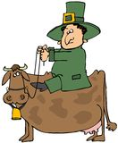 Leprechaun Riding A Cow Stock Image