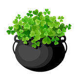 Leprechauns pot with shamrock. Stock Images