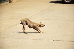 Leprosy dog relax Stock Photography