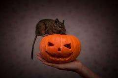 Ślepuszonka w Halloweenowej bani Zdjęcie Stock