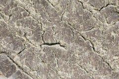 Leravägg, abstrakt bakgrund Royaltyfri Foto