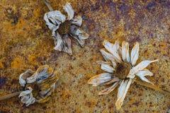 Lerciume arrugginito di decomposizione astratto dei fiori fotografia stock libera da diritti