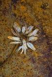 Lerciume arrugginito di decomposizione astratto del fiore fotografia stock