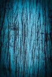 Lerciume blu della bella natura e fondo di legno sporco di struttura Fotografie Stock