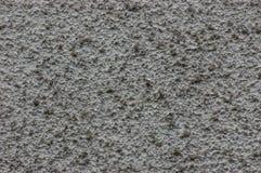 Lerciume Grey Wall Stucco Texture, macro spazio della copia del primo piano del grande fondo strutturato orizzontale dettagliato  immagine stock libera da diritti