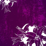 Lerciume Lily Flower Background Fotografia Stock Libera da Diritti