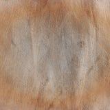 Lerciume, struttura di piastra metallica sporca ed arrugginita graffiata Immagini Stock Libere da Diritti