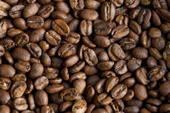 Lerida estate coffe royalty free stock images