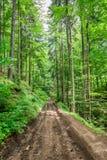 Lerig bergväg i skogen Arkivfoto