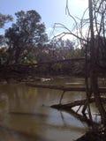 lerig flod Arkivbild