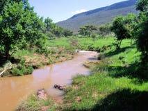 lerig flod Arkivfoto