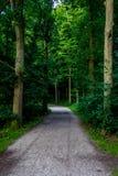 Lerig väg in i en skog på den Haagse bosen, skog i Haag Royaltyfri Fotografi