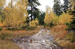 Lerig väg i höstskogen Arkivbild