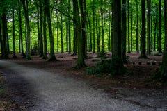 Lerig väg inom en tät skog på den Haagse bosen, skog i mumlen Royaltyfri Foto