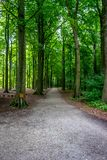 Lerig väg som leder in i en skog på den Haagse bosen, skog i mumlen Arkivfoton